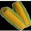 Photo of Sweet Corn Yellow