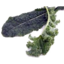 Photo of Kale Curly