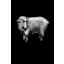 Photo of Black Sheep Sauvignon Blanc