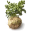 Photo of Celeriac
