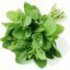 Photo of Mint bunch