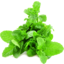 Photo of Herb Mint Bunch