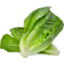 Photo of Cos Lettuce Bagged