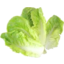Photo of Baby Cos Lettuce Leaves Loose Kg