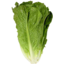 Photo of Lettuce - Cos