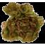 Photo of Lettuce - Red Or Green Oak