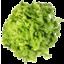 Photo of Lettuce Fancy