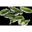 Photo of Cucumber - Lebanese - 2nd Quality