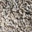 Photo of Sunflower Seeds - Bulk