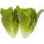 Photo of Baby Cos Lettuce 2 Pack